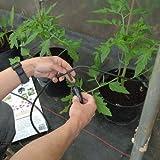 Iriso Bewässerungsset - für die Bewässerung von 12 Pflanzen