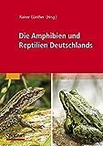 Die Amphibien und Reptilien Deutschlands -