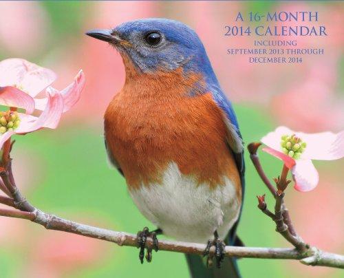 Backyard Birds Of The South 2014 16 Month Calendar September 2013 Through December 2014