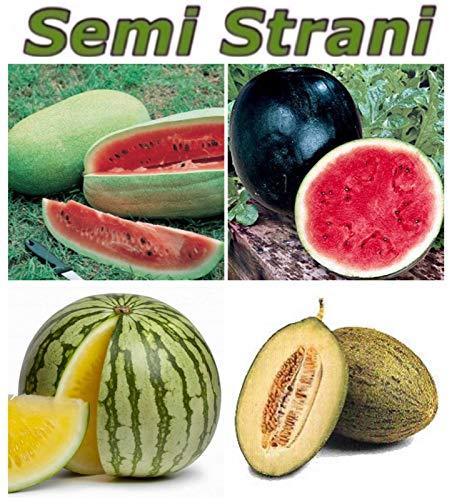 15x Mini Melonen Rot Sugar Baby Samen Obst Pflanze Rarität essbar #135