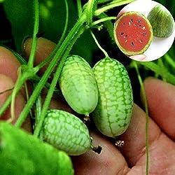 BigFamily 10 Stücke Mini Wassermelone Samen Sehr Süßen Saft Obst Hausgarten Hinterhof Edel