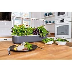 Click & Grow 4742793008899 Smart Garden 9, Dunkelgrau, 60,5 x 18,5 x 40 cm