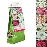 Inter Flower - 150 Blumenzwiebeln - ROSA WEISS MIX - 6 Sorten - Iris, Dahlia, Gladiolen, Freesia, Ranunculus, Anemone - in Geschenkverpackung - jetzt einpflanzen