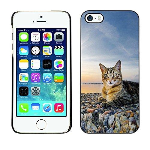 GooooStore/Housse Etui Cas Coque - House Cat Nature Sunset Shorthair British - Apple iPhone 5 / 5S