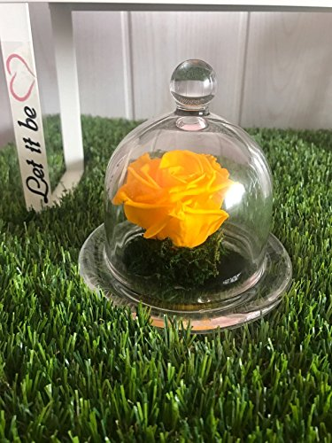 Rosa eterna en urna de cristal + tarjeta con mensaje + caja de regalo URGENTE 24H