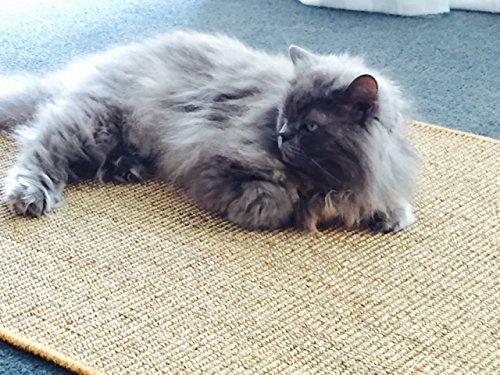 Katzen-Kratzmatte - Natur, 50cm x 100cm, 100% Sisal, Rutschhemmend - Sisal-Matte für Katzen, Geeignet für Fußbodenheizung, Sisalteppich für Wand & Boden