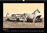 Vollblutaraber (Wandkalender 2019 DIN A3 quer): Araber - ein Traum von Freiheit und Schönheit (Monatskalender, 14 Seiten ) (CALVENDO Orte) - Francis Tilborghs