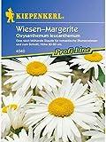 Chrysanthemum leucanthemum Wiesenmargerite