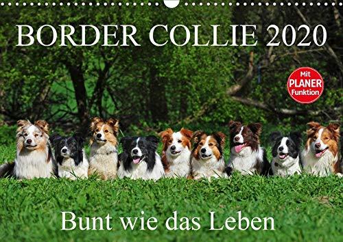 Border Collie 2020 (Wandkalender 2020 DIN A3 quer): Auf 13 wunderschönen Fotos zeigt die Tierfotografin Sigrid Starick Border Collies in vielen Farben ... 14 Seiten ) (CALVENDO Tiere) - 14 Seiten In Farbe
