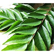 FRESH CURRY LEAVES (3 packs)