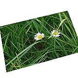 AMDXD Flanell Teppich Weiß Blumen Design Teppiche für Wohnzimmer Schlafzimmer Bunt 70x45CM