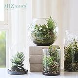 Note. Miz Succulents Plants Vase Decoration Home Micro Landscape Artificial Succulents Garden Decoration Glass Vase