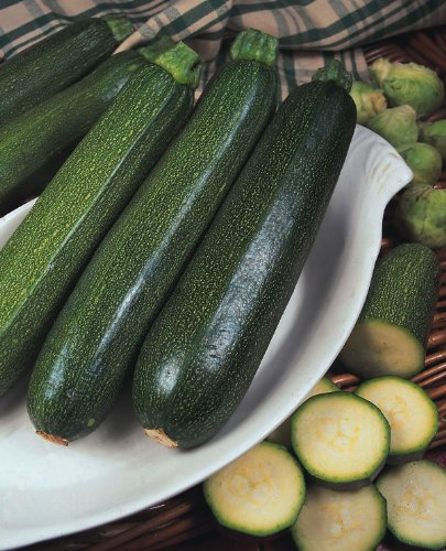 JustSeed – Gemüse – Zucchini – Green Bush – 25 Samen