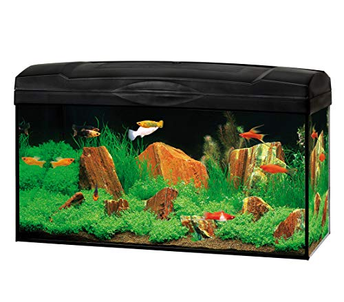 Dehner Gute Wahl Aquarium Starterset Scout 54 l, ca. 60 x 30 x 30 cm, Glas/Kunststoff
