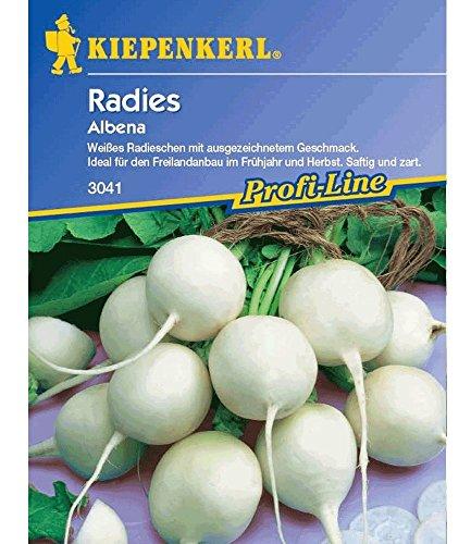 Radies 'Albena', 1 Tüte Samen