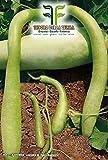 20 C.ca Semi Zucca Lunga Serpente Di Sicilia - Lagenaria Siceraria Longissima In Confezione Originale Prodotto in Italia - Zucche lunghe serpenti