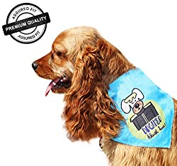 DogSpot Bandana - Medium