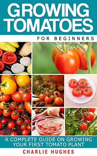 growing-tomatoes-for-beginners-a-complete-guide-on-growing-your-first-tomato-plant-growing-tomatoes-