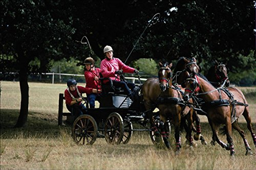 585085 Pony Teams National Carriage Driving Championships A4 Photo Poster Print 10x8