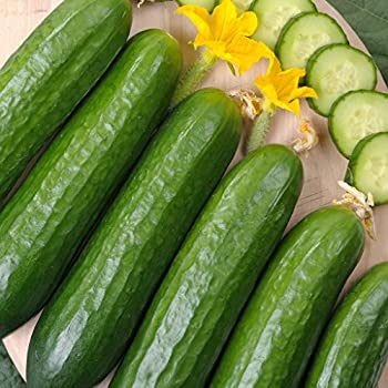 30 SEEDS FREE UK P/&P ** VEGETABLE CUCUMBER MARKETMORE