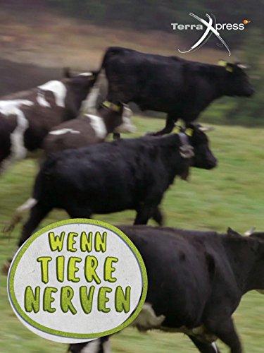 Wenn Tiere nerven