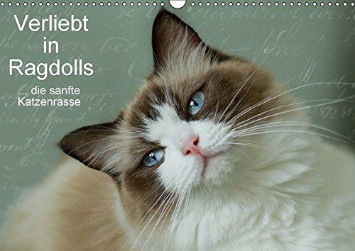 Verliebt in Ragdolls ... die sanfte Katzenrasse (Wandkalender 2018 DIN A3 quer): Die Ragdoll ist eine sanfte Halblanghaarkatze (Monatskalender, 14 ... [Apr 04, 2017] Reiß-Seibert, Marion