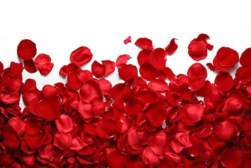 The Twiddlers 2000 Pétales de Roses Rouges en Soie - Artificielle Petale de Rose Parfait pour la Saint Valentin Decoration - Célébrations et Fêtes de Mariage - Moments Romantiques Deco Table