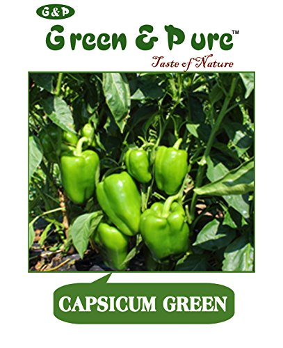 Green and Pure High Yield Organic Vegetable Seeds Capsicum for Kitchen/Terrace/Home Garden