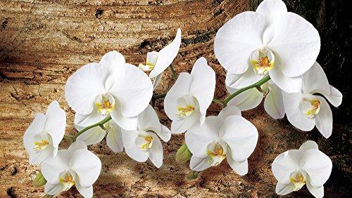 fotomurale-foto-wallpaper-carta-da-parati-foto-murale-orchidee-su-brett-1017-sfondo-blu-carta-368cm-