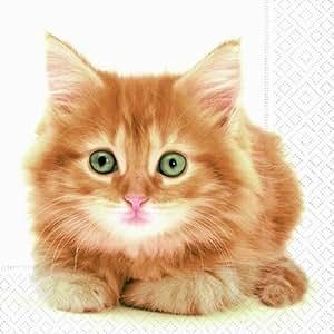 Lot de 20 serviettes en papier motif cute putzige chat-kitten animal/animaux 33/animal x 33 cm