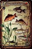 Blechschild 20x30 cm Süßwasser Fische angeln Brasse Karpfen Schleie Metall Schild