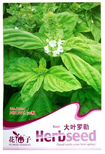 50 semillas de albahaca - Ocimun Gralissimum - semillas de albahaca en paquete original de hierbas aromáticas