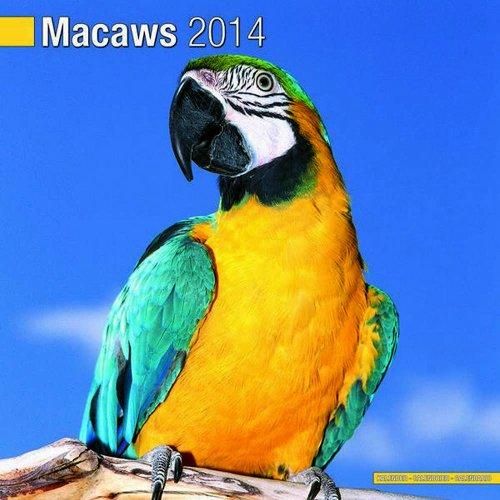 Macaws 2014