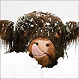 Charity Christmas Cards (ALM1683) In Aid Of The Multiple Sclerosis Trust - Snow Cow - Pack Of 8 Cards