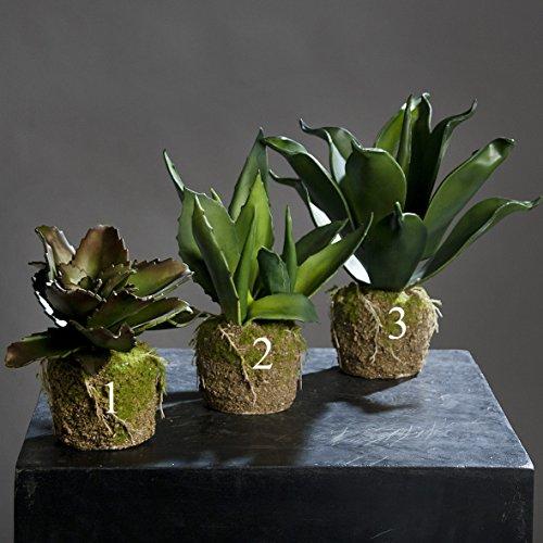 Ziegler Agave Kunstpflanze Dekopflanze künstlich Sukkulente 56351 F83