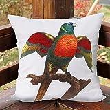 memorecool Haustierhaus Kissenbezug Parrot Muster No Filler 40,6x 40,6cm 1Stück, parrot4, 16x16inch