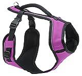 PetSafe Easy Sport Hundegeschirr L pink, Extra, Reflektoren, Geschirrgriff, für große Hunde