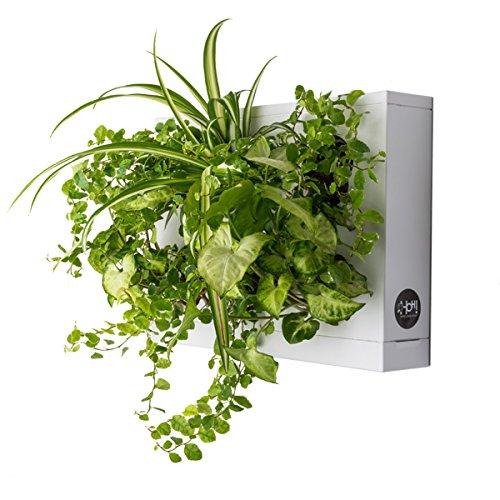 hoh! by ortisgreen, quadro vegetale di colore bianco in plastica abs, vaso da parete, vaso da appendere, decorazione parete, verde verticale, green design, substrato naturale e istruzioni incluse