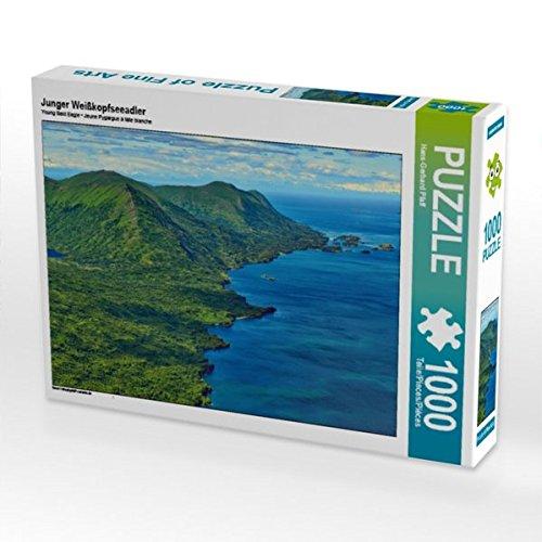 Junger Weißkopfseeadler 1000 Teile Puzzle quer -