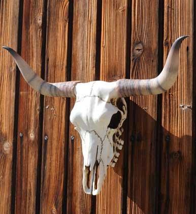 Veronese Design  Bullenschädel Bullen Longhorn Schädel Wicca Türbogen Metal LARP