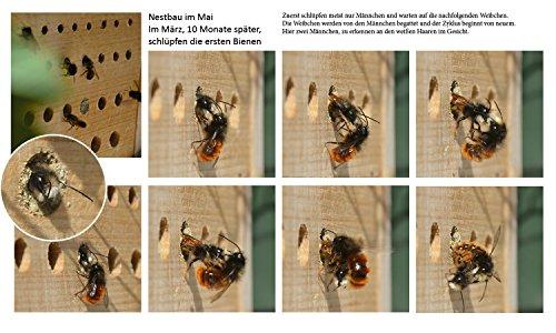 Luxus-Insektenhotels Hochwertige Nisthilfen für Wildbienen - 5