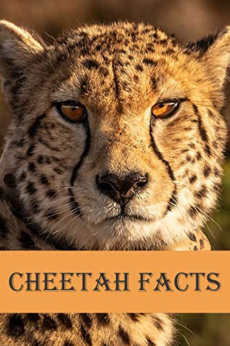 Cheetah Facts: Photobook of Cheetah Facts with real images and Facts that you should know that's so amazing (Fun Facts 10) (English Edition)