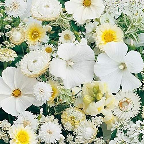 lten Blumenmischung bienenfreundlich Blütenträume blau/weiß/rot/gelb Glockenblume Blumensamen exotisch mehrjährig winterhart für Schmetterlinge, Bienen, Hummeln und Nützlinge ()