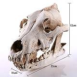 Homyl Realistisches Wolf Schädel Figur Skelett Modell für Aquarium Haus Dekoration
