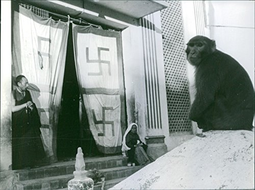 vintage-photo-of-1970monkey-in-front-of-temple-sitting-and-looking-awayon-the-left-side-is-a-woman-s