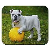 English Bulldog-Spiel inkl. Ball, Hundespielzeug, Maus Pad, Mousepad