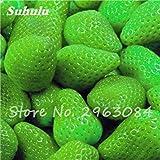 VISTARIC Acquistare Morus Alba Albero semi 400pcs piante foglio del gelso baco da seta per alimentare Sang Shu