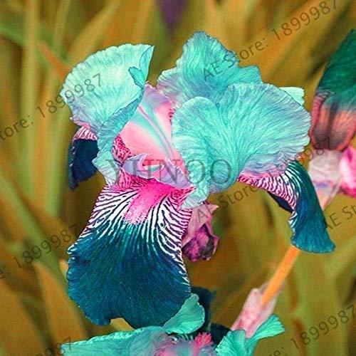 pinkdose perdita di promozione! iris orchidea fiori flores all'aperto perenne domestico di diy giardino bonsai piante da vaso facile da coltivare plantas100pcs, bjrt