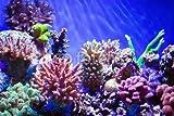 druck-shop24 Wunschmotiv: Coral reef aquarium #100741047 - Bild hinter Acrylglas - 3:2-60 x 40 cm/40 x 60 cm