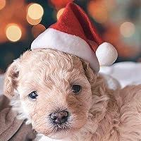 Everpert - Adorno de Navidad para Mascotas, cinturón elástico, Sombreros de Papá Noel para Navidad
